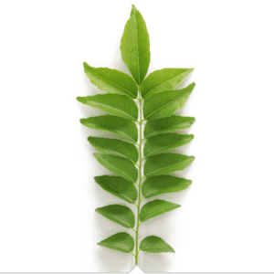 jeunesse RVL Curry Leaf